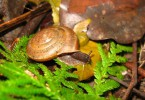 new_snail_named_after_gay_marriage_rights_struggle