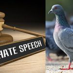 Pigeons vs anti-gay hate speech: Equality Court process questioned