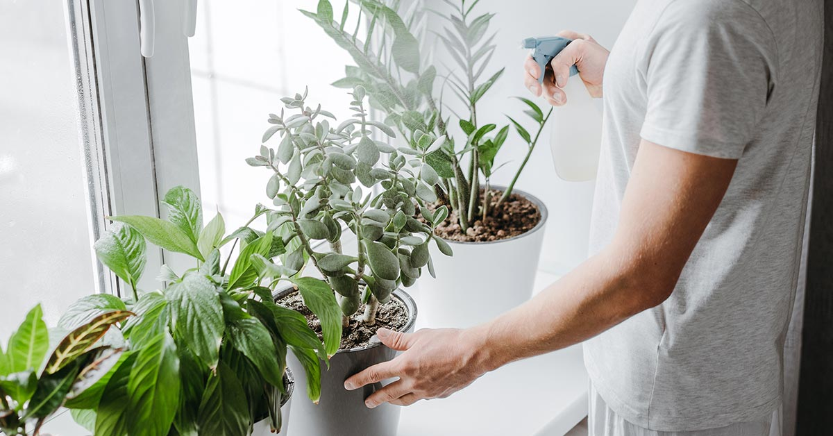 A few essential winter indoor gardening tips